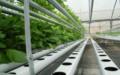 Sistema inteligente para el control de bicarbonatos en el riego dentro de la agricultura de precisión hidropónica.