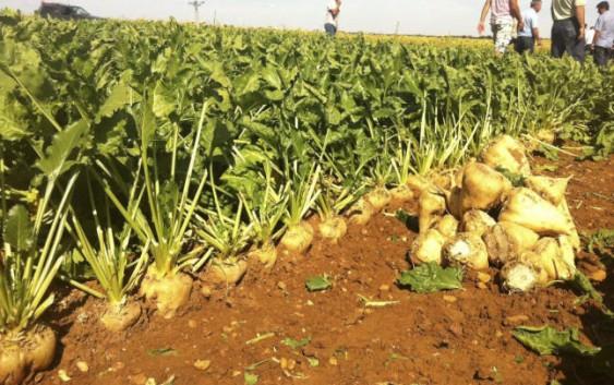 Calibración y validación de AquaCrop para la remolacha azucarera en España