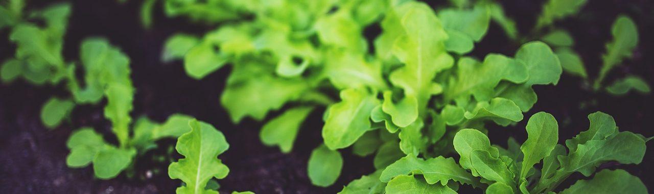 Normas de la UE para los alimentos ecológicos 2017