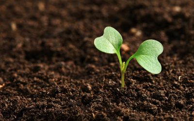 Trabajando en I+D para fomentar una agricultura sostenible