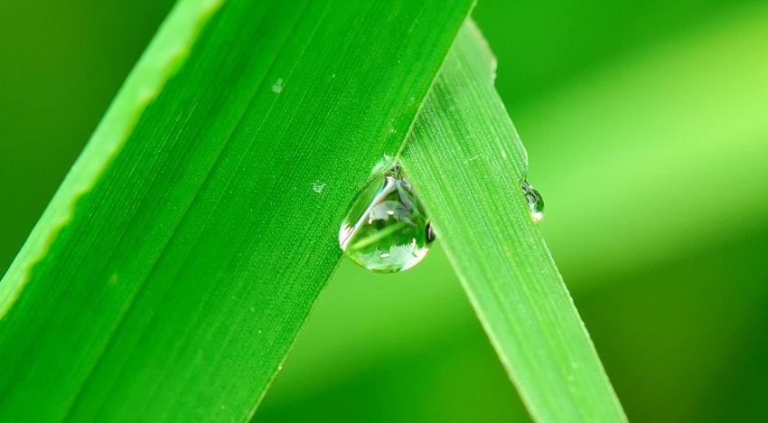 Curso en materia de manejo de agua para agricultores en C-La Mancha