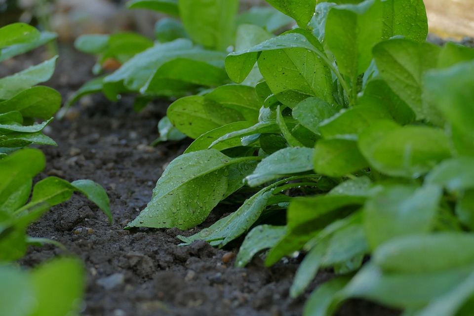 Aprender a regar: jornada técnica para cultivos hortofrutícolas