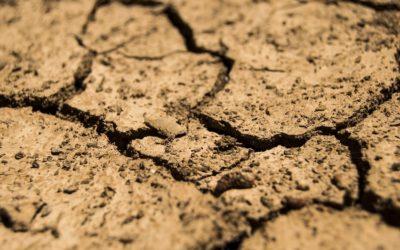 ¿Cómo interpretar datos de humedad del suelo?